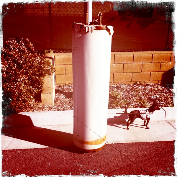 Water Heater with Small Dog