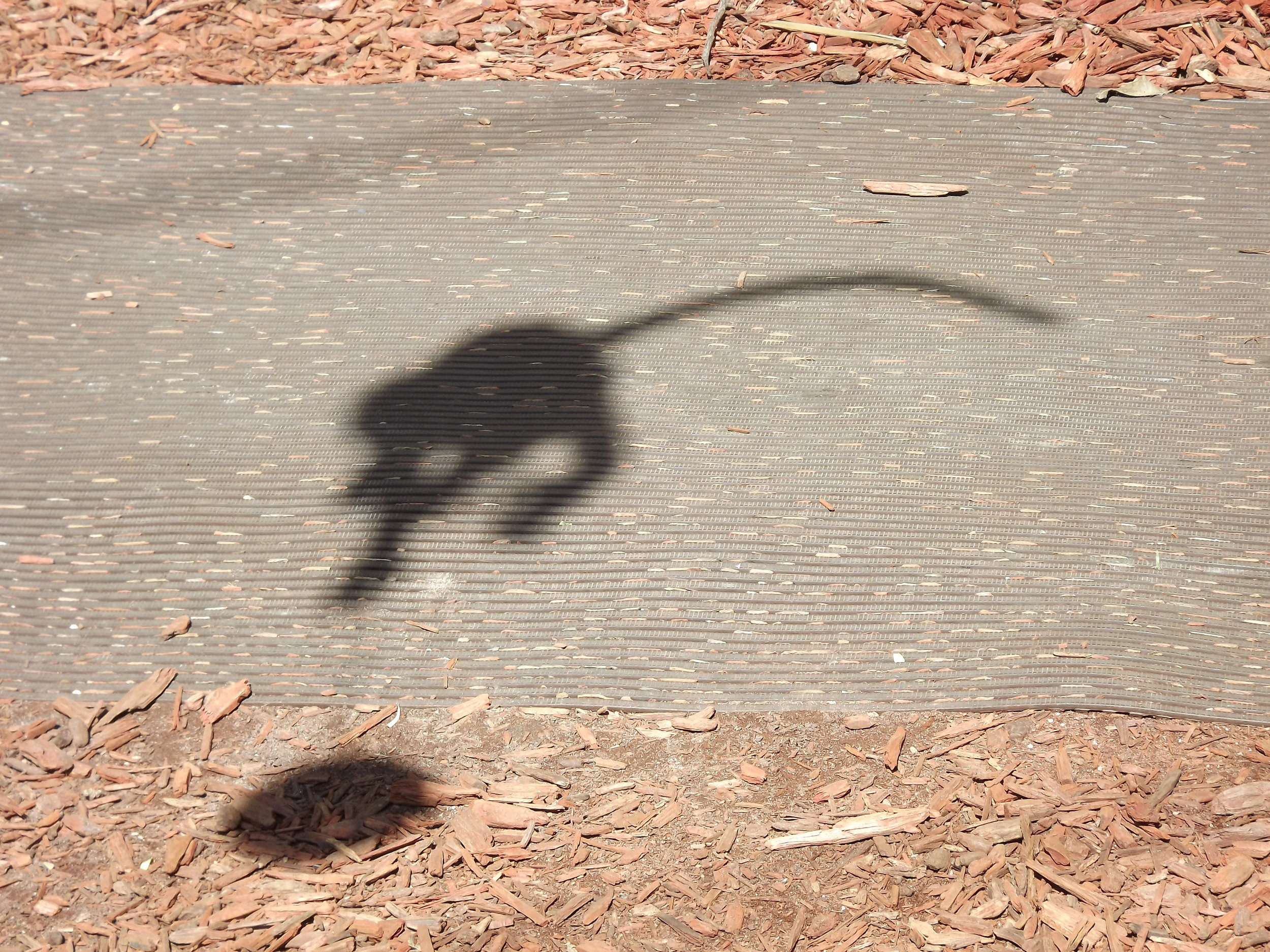 Shadow monkey