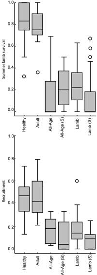 Summer lamb survival and recruitment in healthy, adult only, all-age, and lamb pneumonia-years vs. suspected all-age or lamb pneumonia-years