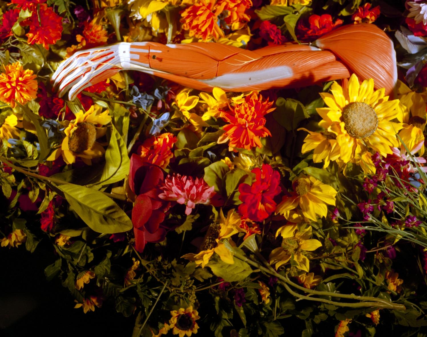 Alaina Hickman, from  Anatomical .