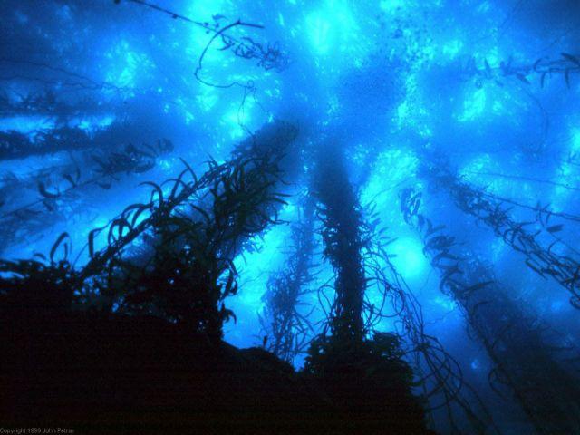 deep-sea-exploration.jpg