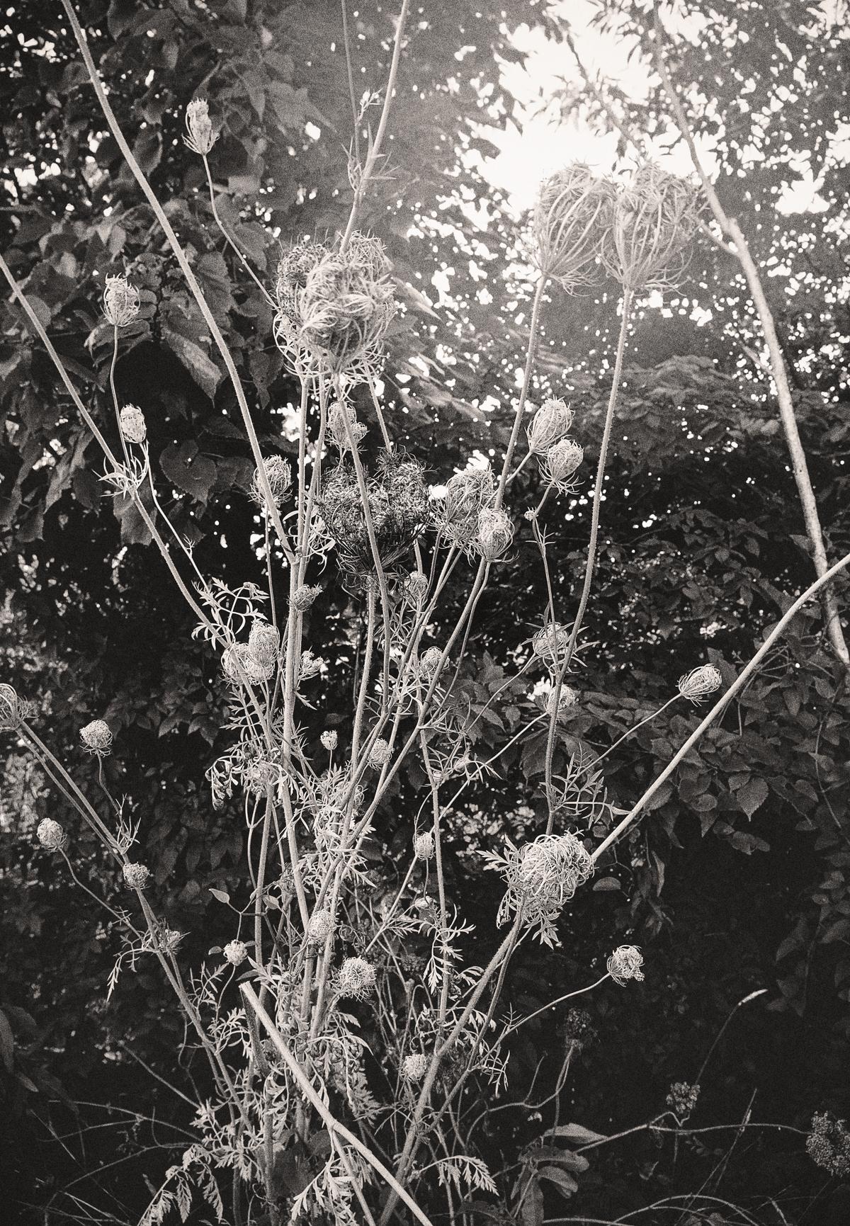 Suffol_Foliage-1.JPG
