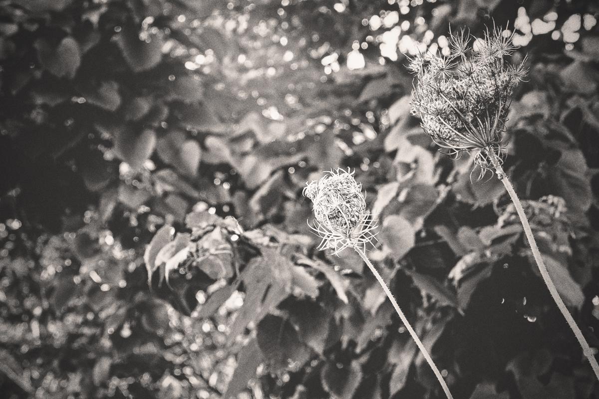 Suffolk_Foliage-2.JPG