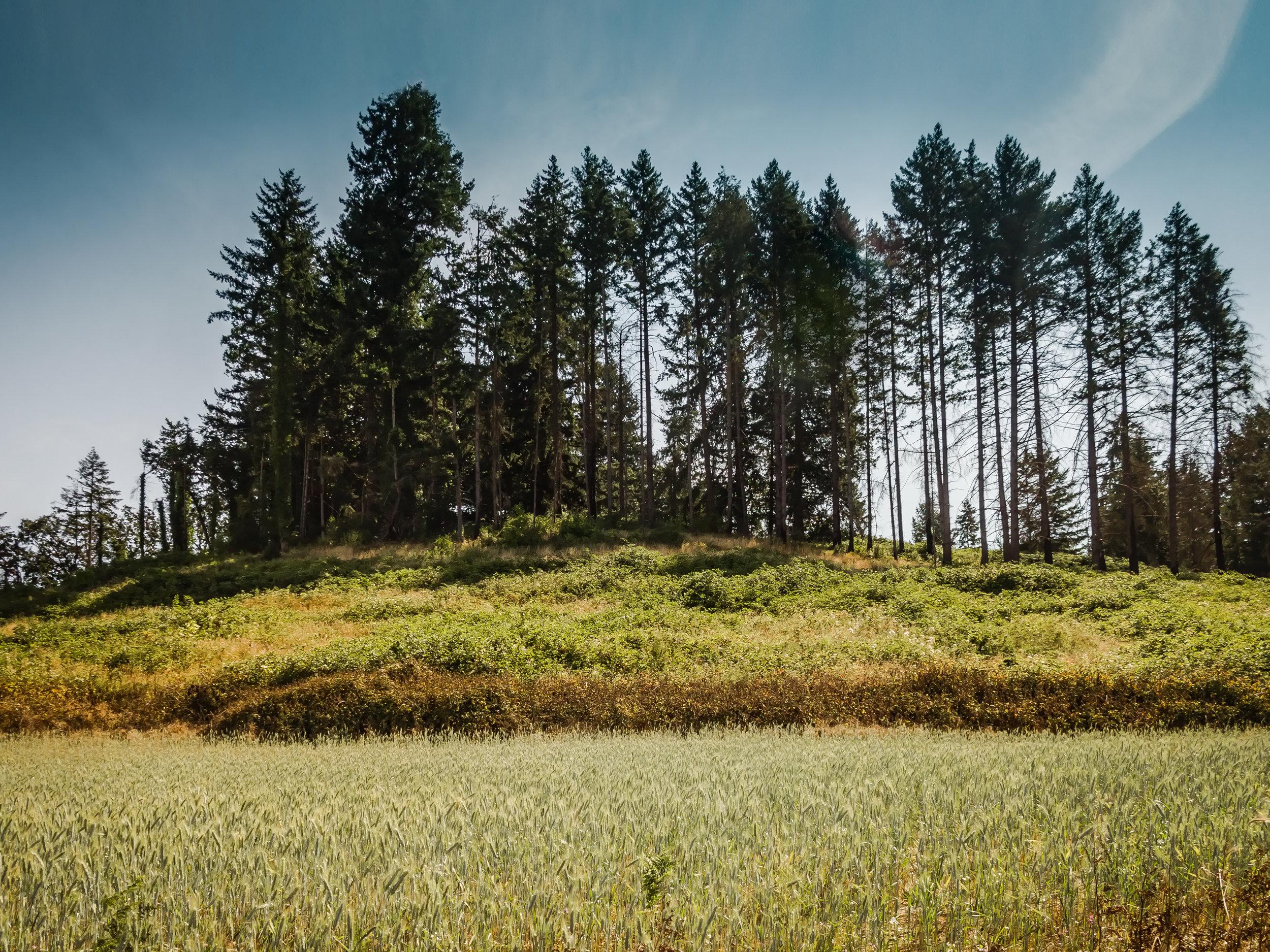 Oregon-2017-6956-2.jpg