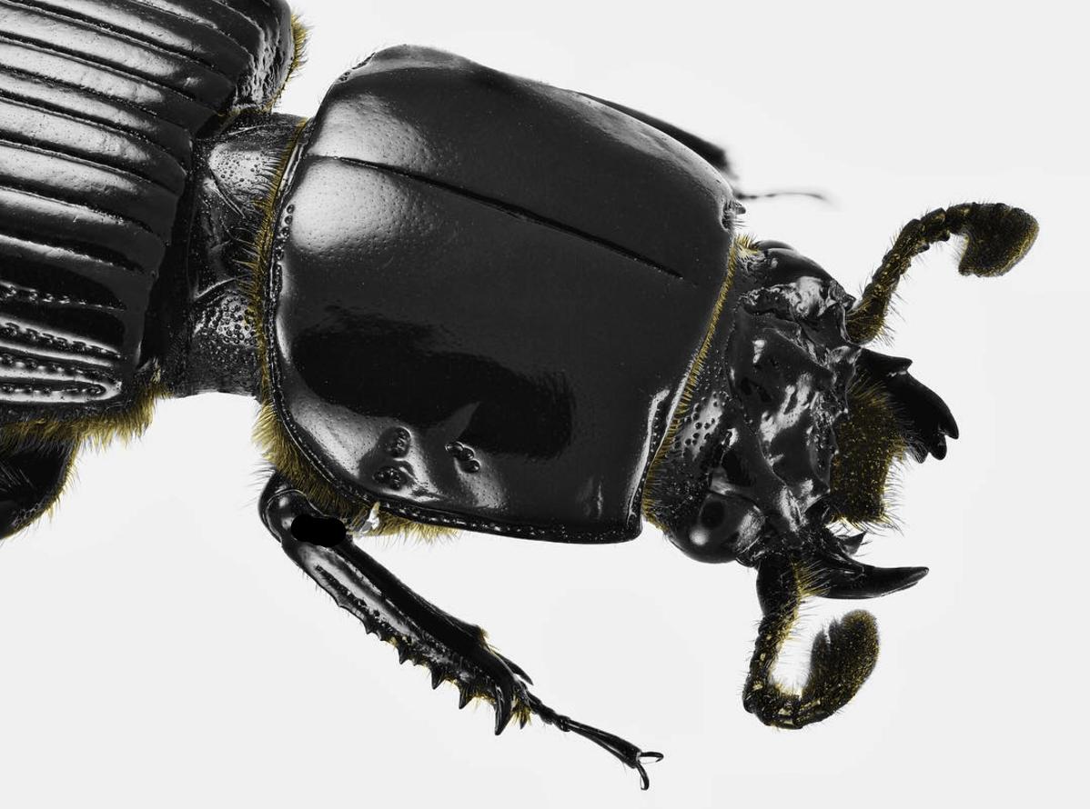 beetle_yellow.png