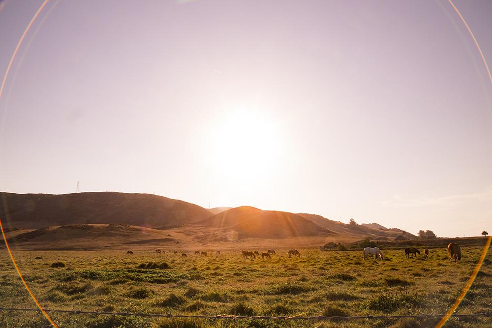 slo-horses-photo-jesskovic-07282014-0929-small.jpg