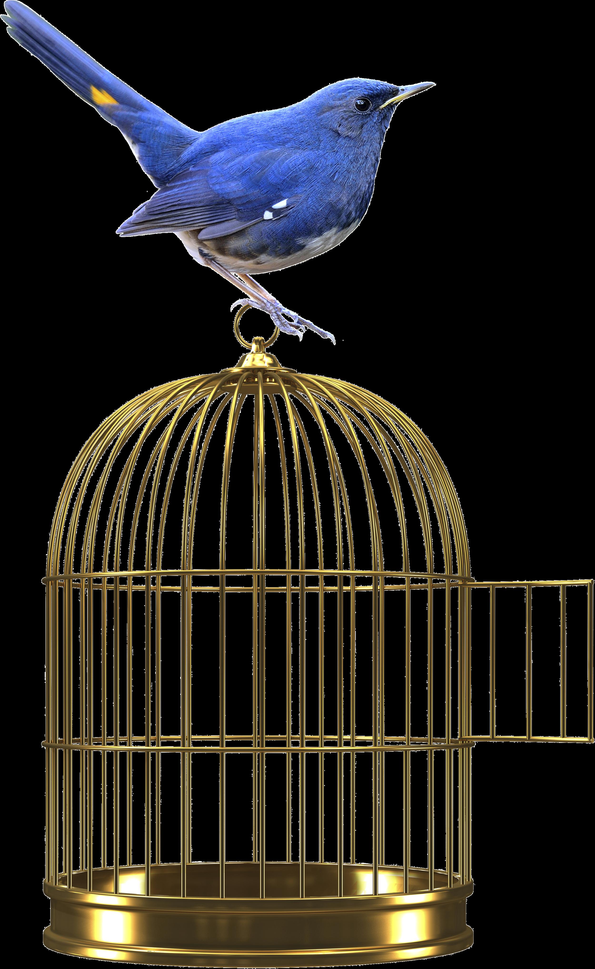 web.bird.png