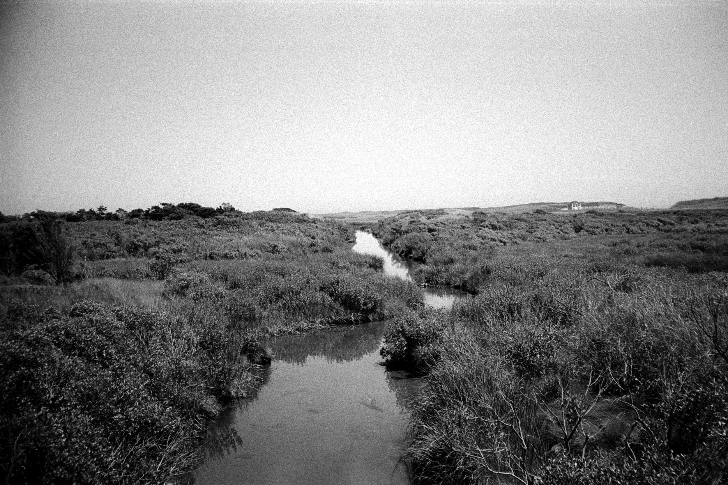 Landscape_Marsh.jpg