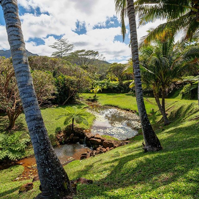 Built to rest on the rolling landscape to take advantage of the green mountain views, this home is safely situated above a year-round running stream, with the sound of falling water able to be heard from every room. #landscape #mountain #home #stream #kauai #hawaii #realestate #buy #homeforsale #forsale #lush #tropical #custom #custombuilt #house #autonomy #privacy #fruit #estate #land #acre #mancave #peaceful #beautiful #private #ipe #mancave #escape #coconut #waterfall --- Find out more about this north shore listing at luxkauai.com.  Offered at 2.9M listed by Amy Frazier and Billy Eckert.