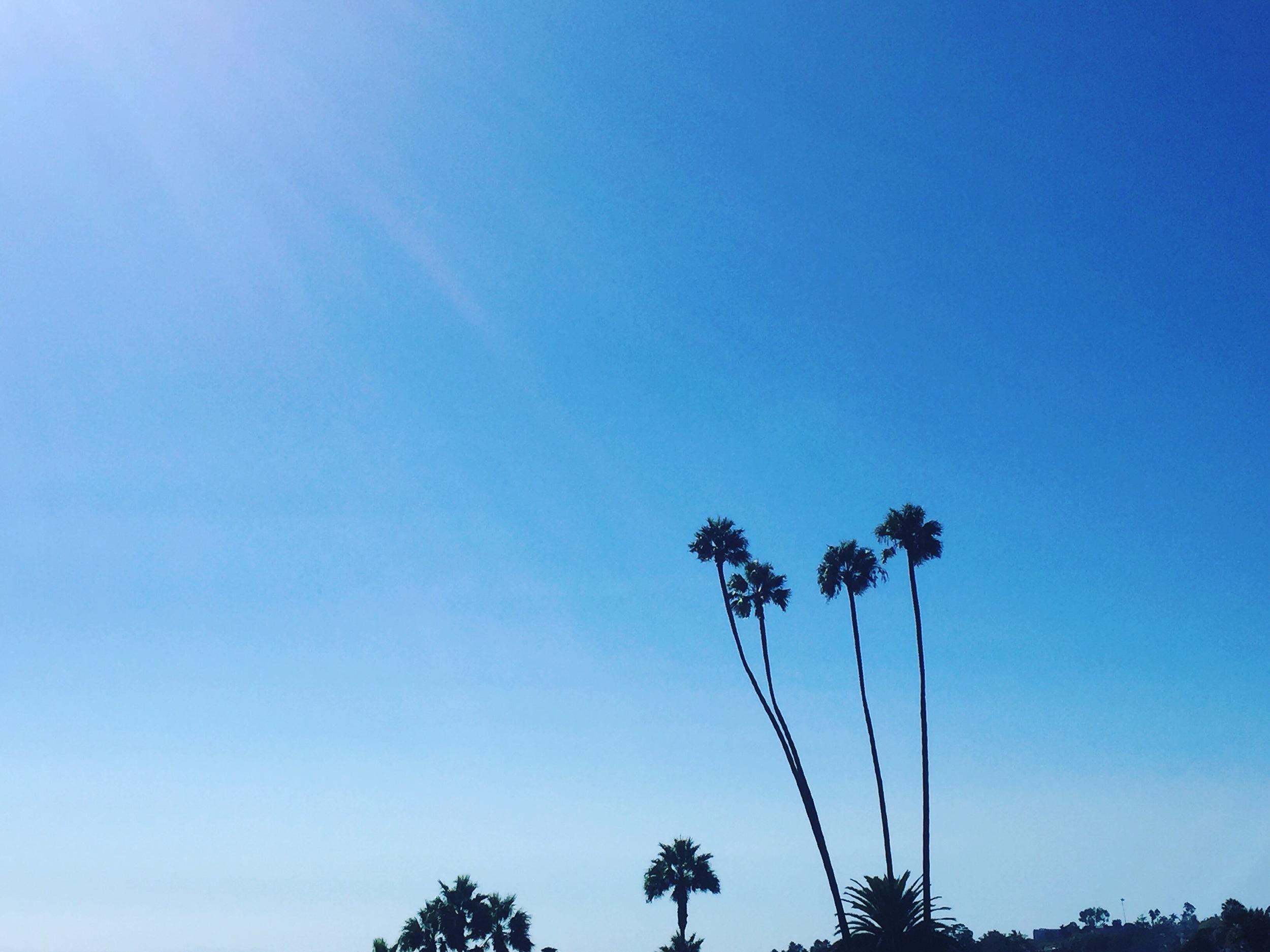 Laguna Beach Yoga