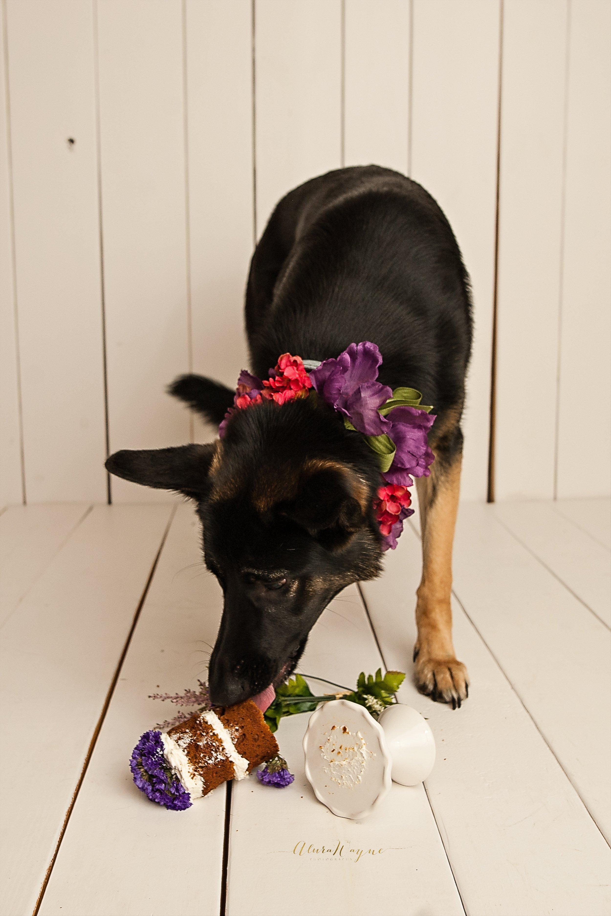 nashville photographers | dog cake smash | alurawayne photography