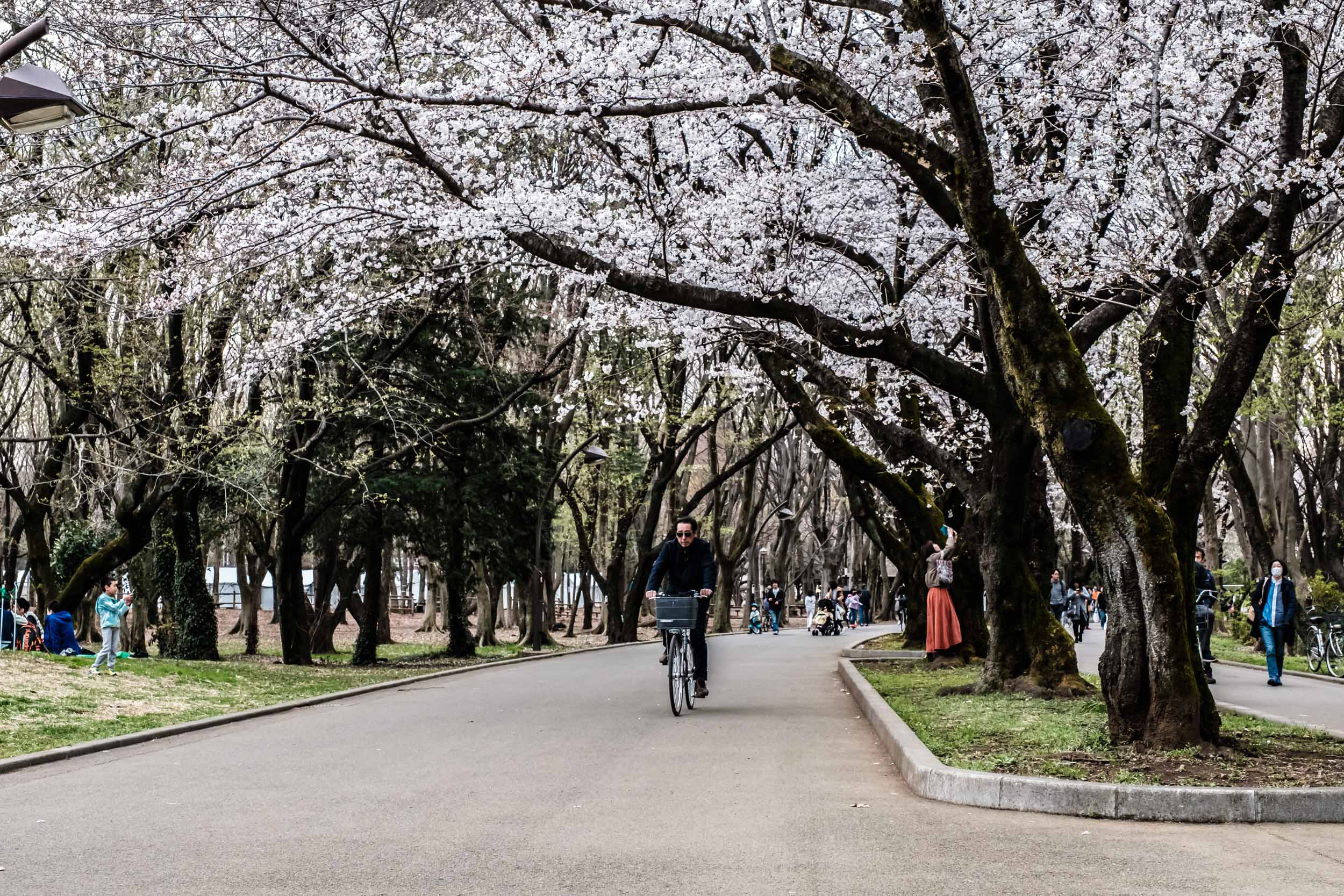 There are always lots of bicycles in Hikarigaoka park