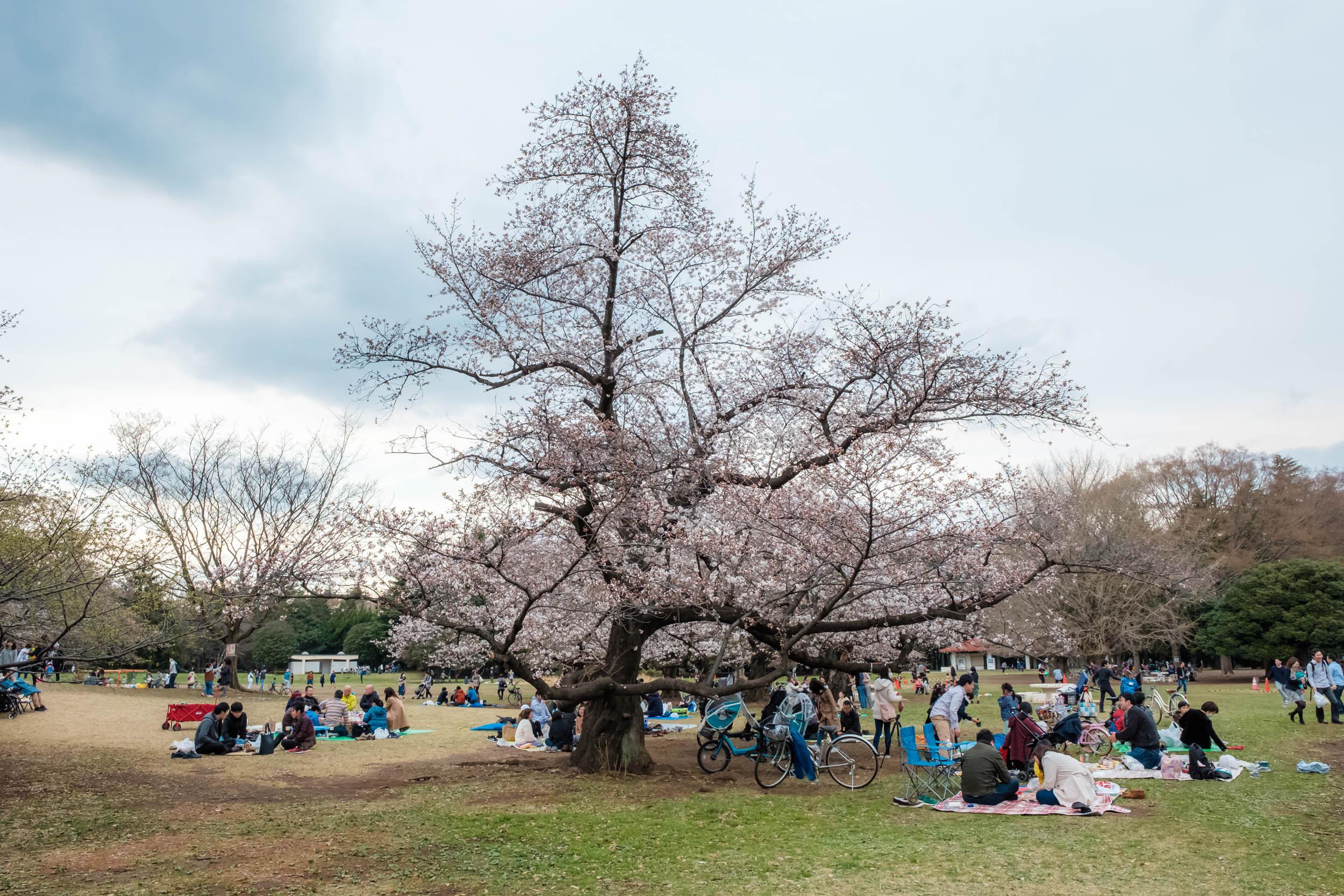 Hikarigaoka Park always has lots of picnics