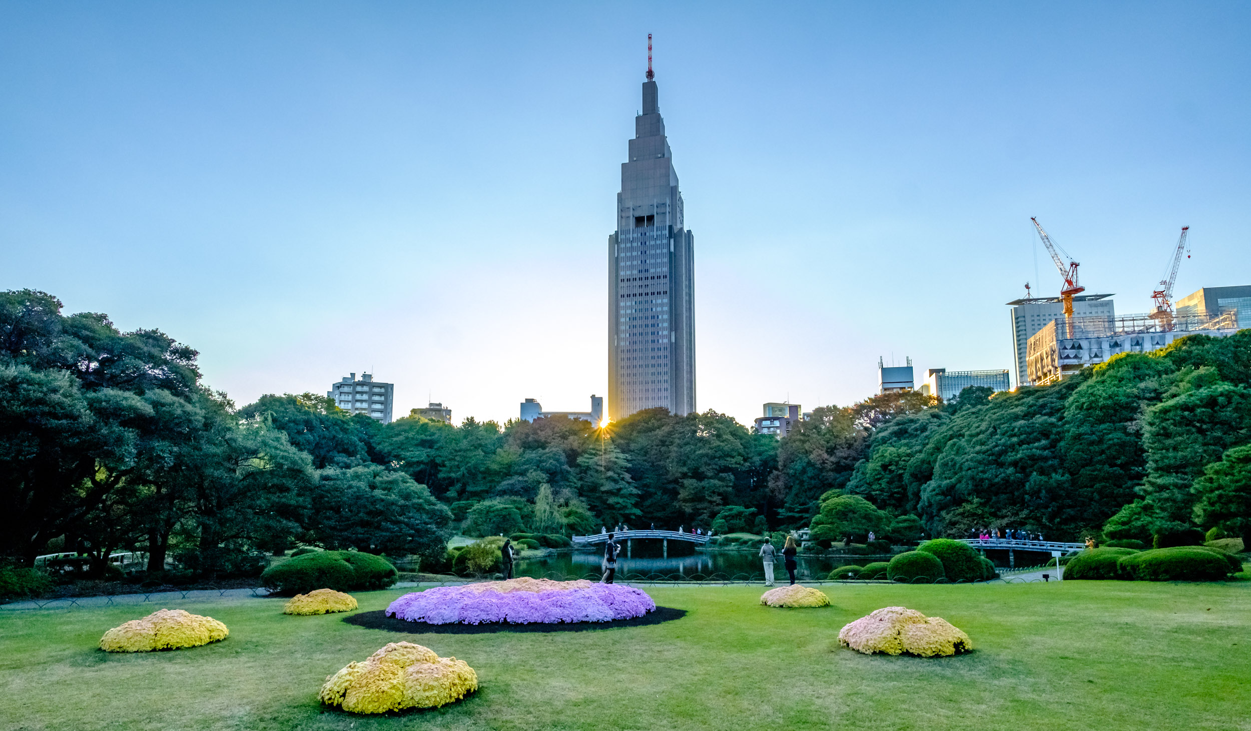 Shinjuku Gyoen and some of its chrysanthemums at sunset, with the NTT DOCOMO building behind