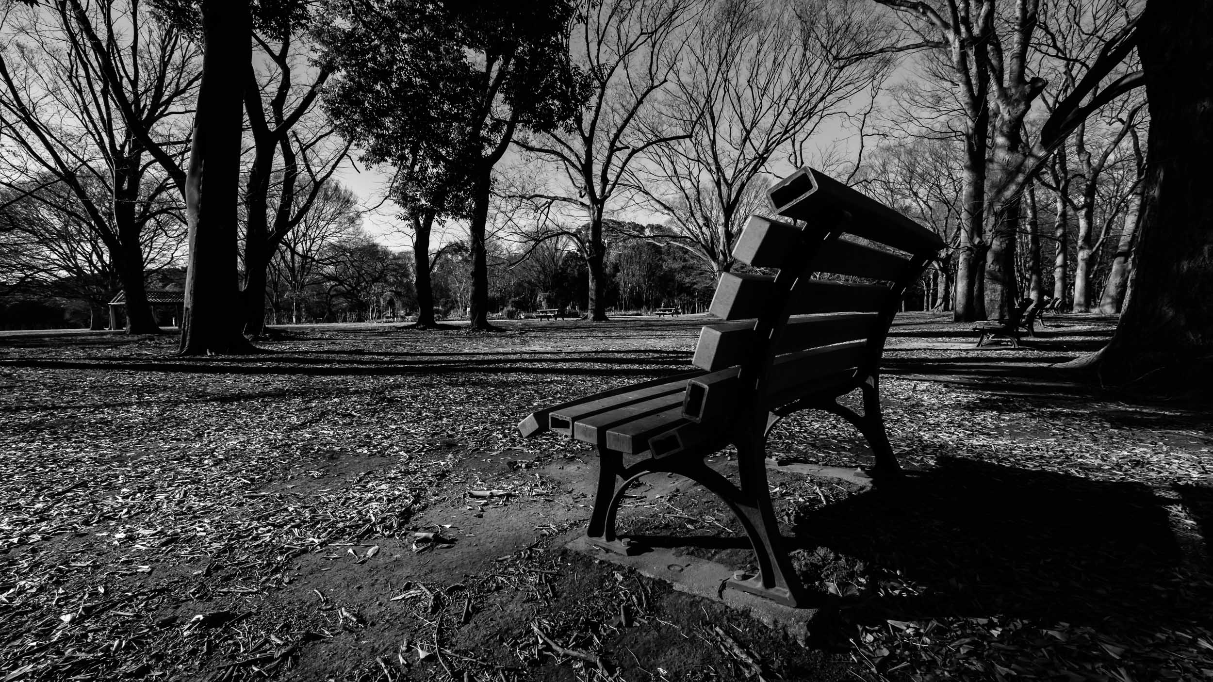 In winter, most of Yoyogi Park's benches are empty