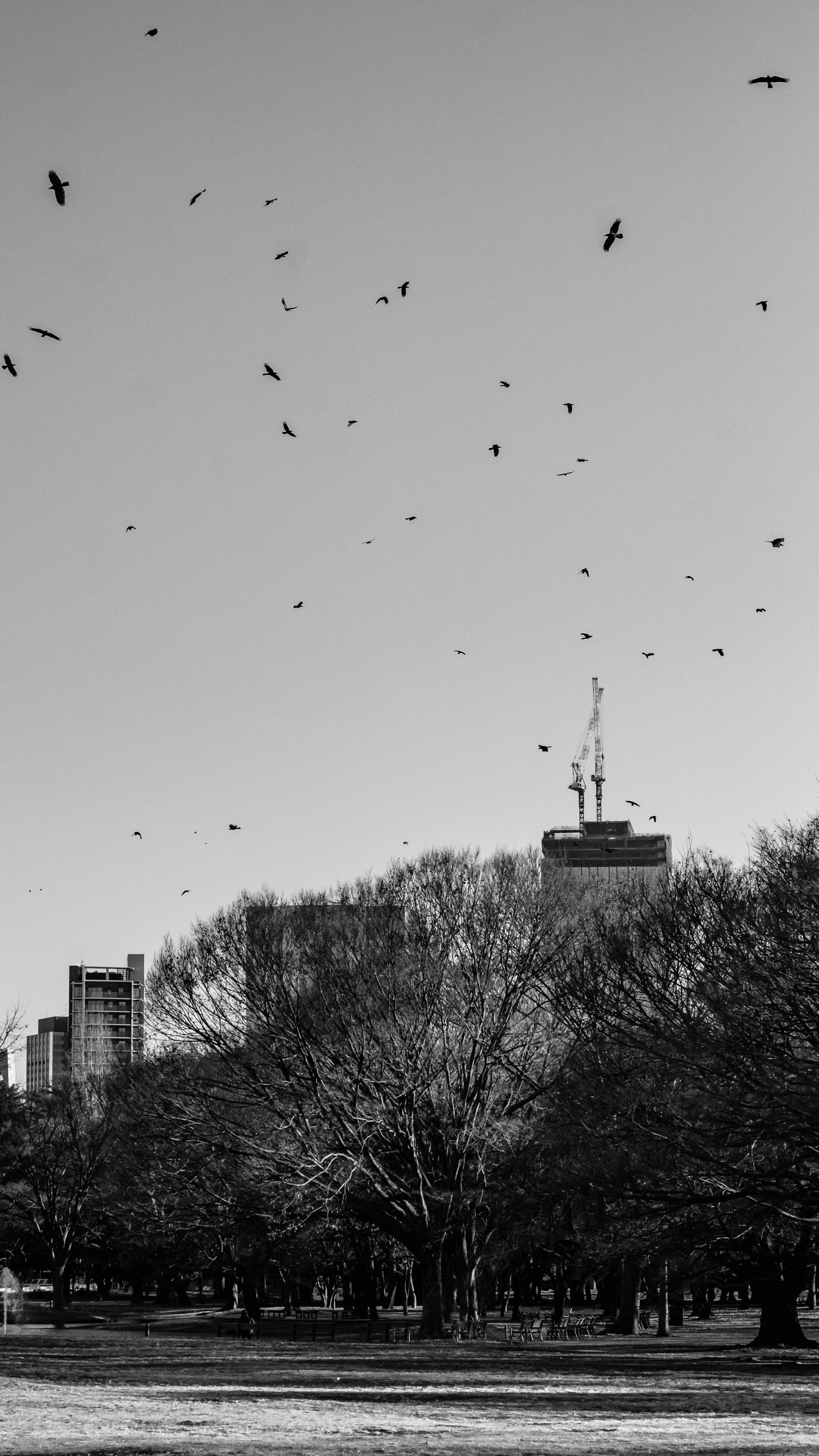 You'll often see huge flocks of crows in Yoyogi Park