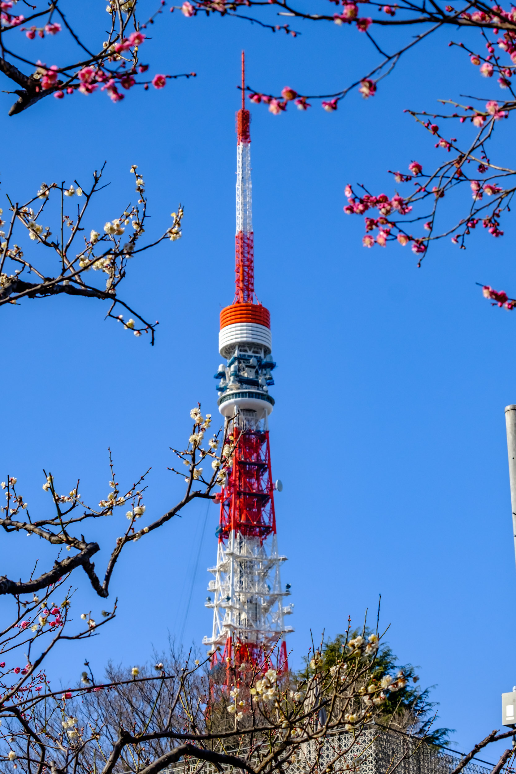 Tokyo Tower seen from Shiba Park