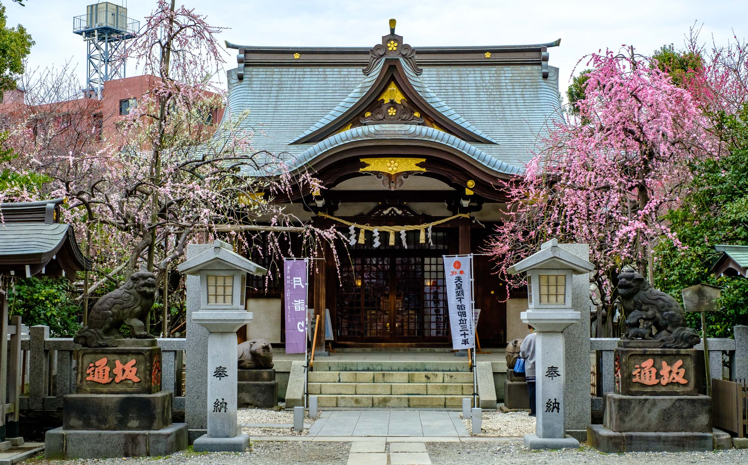 Ushi Tenjin Kitano Shrine when the plum blossoms were in full bloom, during 2019