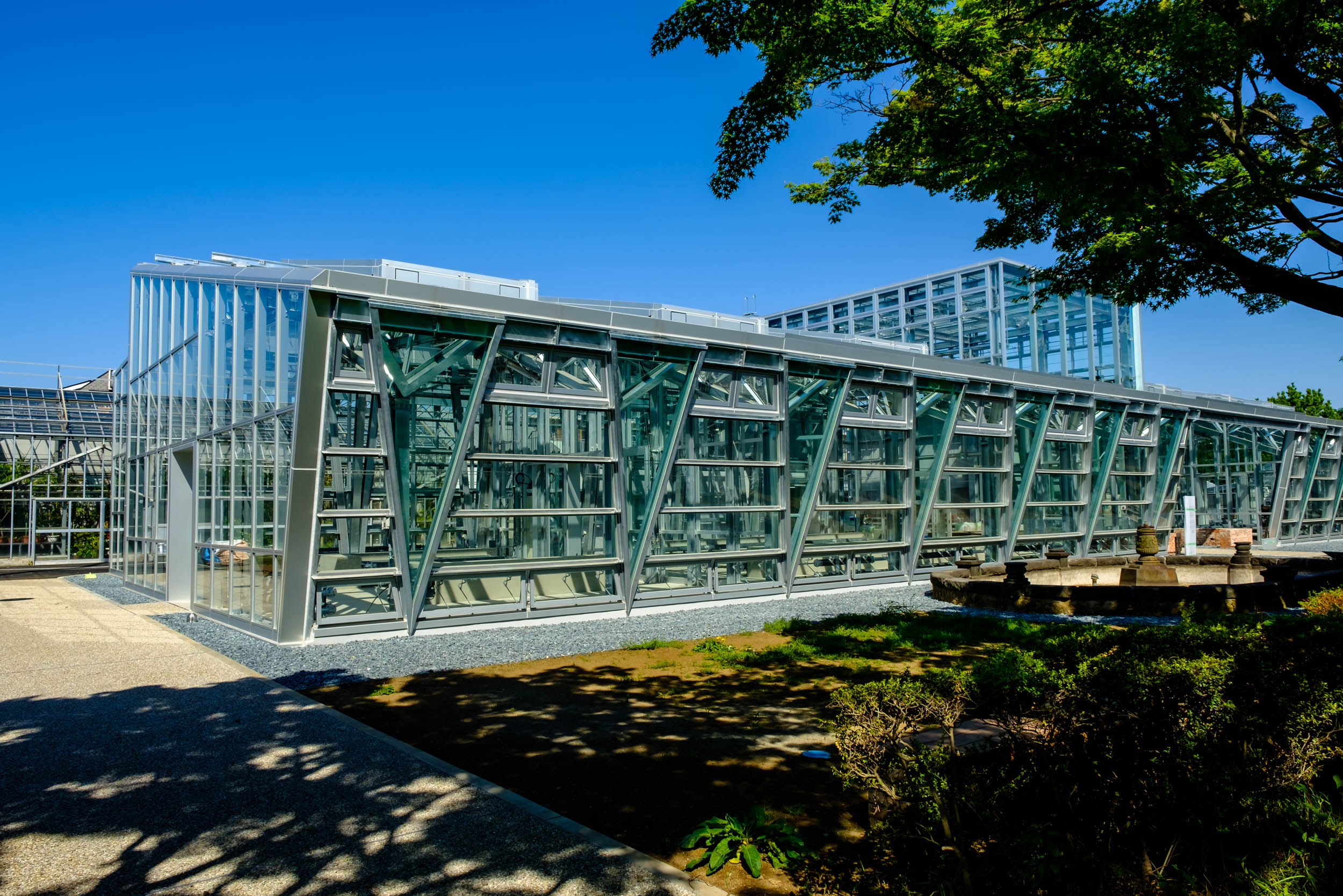 The new greenhouse at Koishikawa Botanical Gardens with the old pool at front