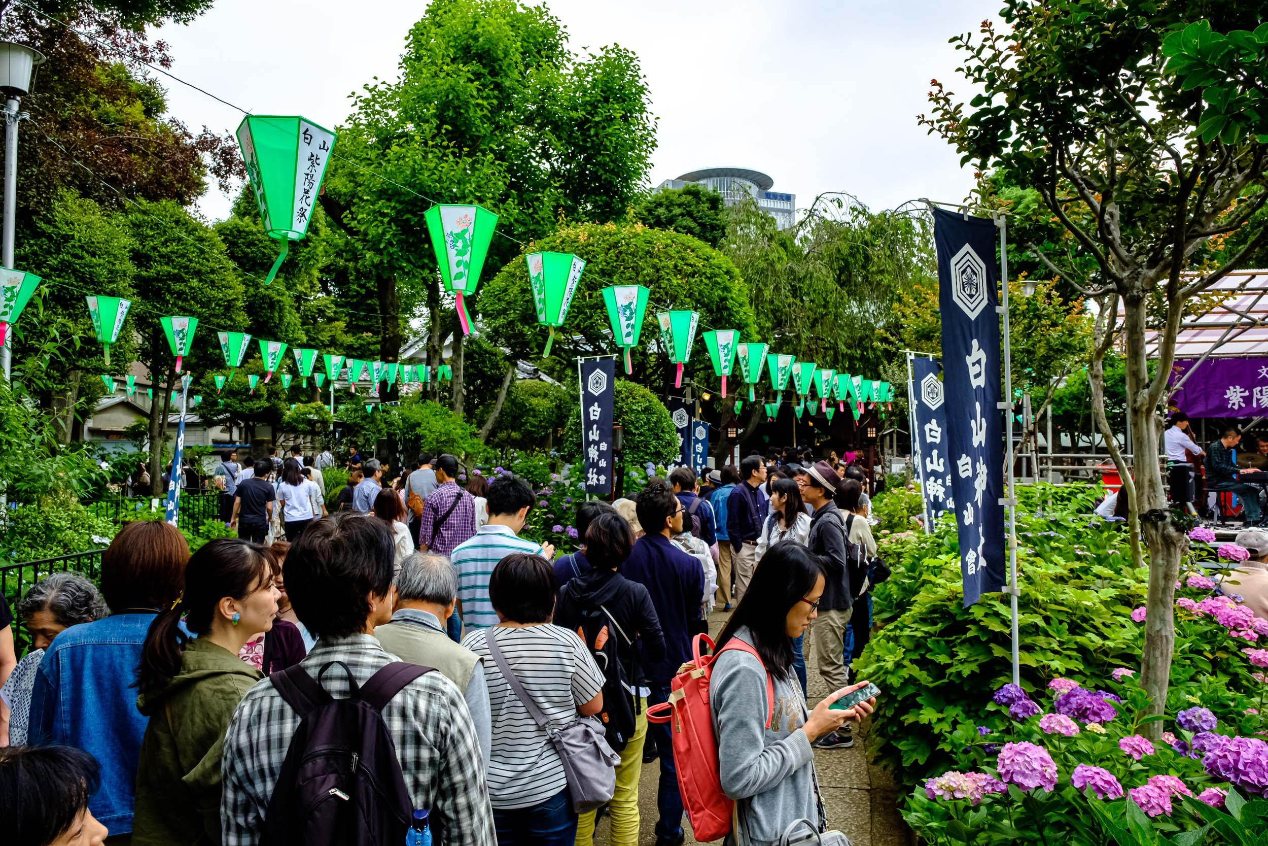 During the Hydrangea Festival, lots of people come to pray at the shrine