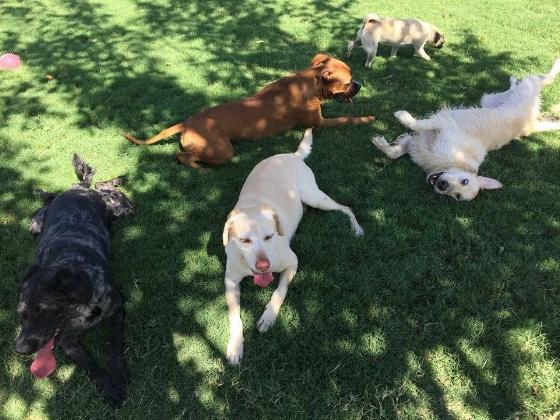 Tucson Dog Daycare
