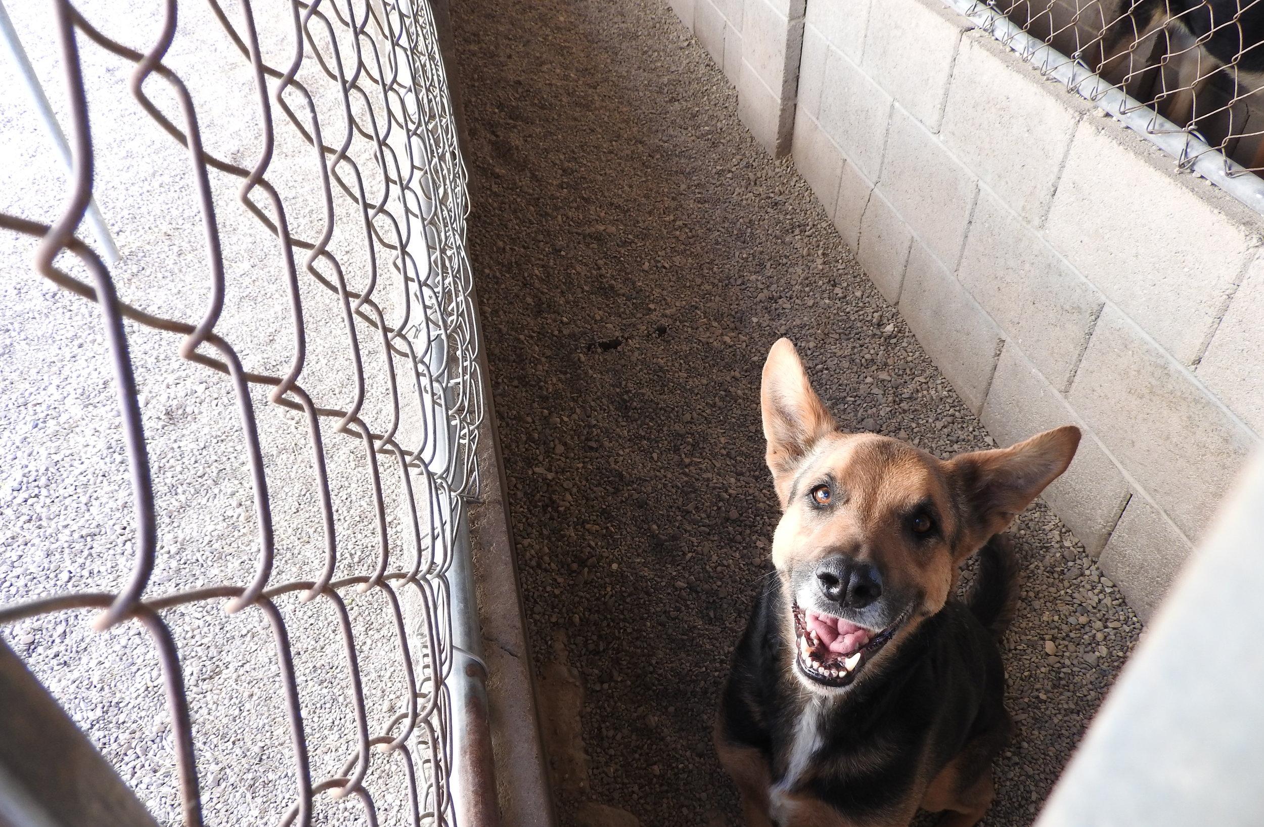 Dog Boarding Kennels Tucson