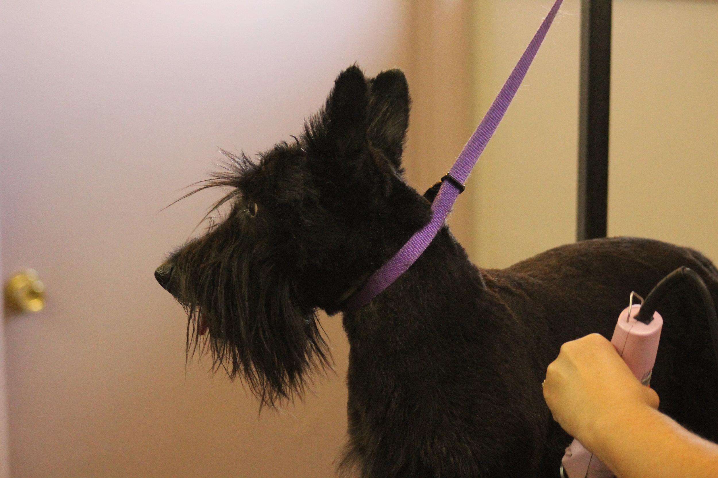 Dog Grooming Tucson