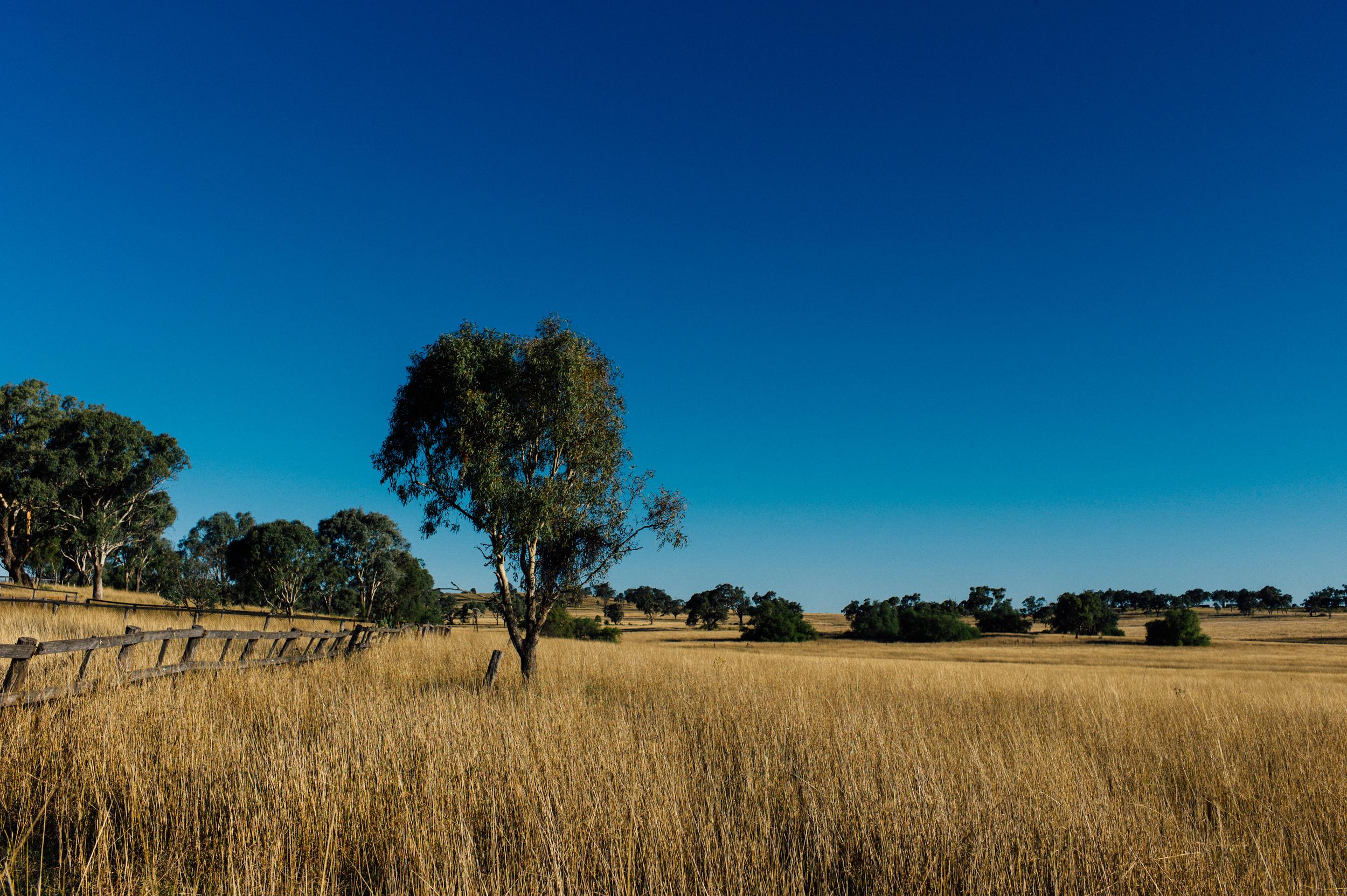 Crops Near Westbrooke