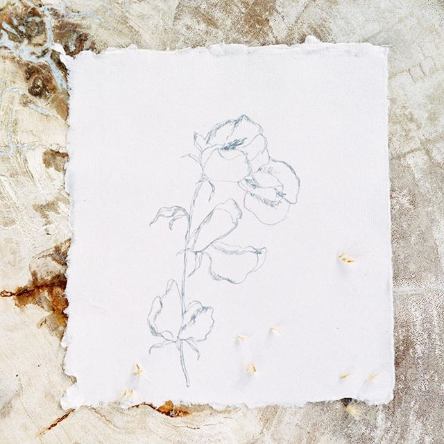 Came across an old sweet pea sketch; remembering the soft beauty found in grateful farewells.