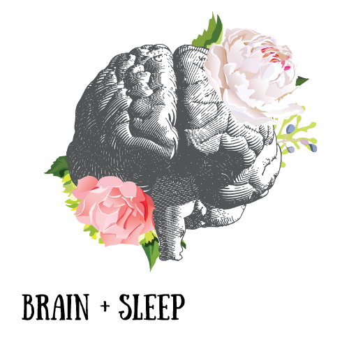 brain-and-sleep.png