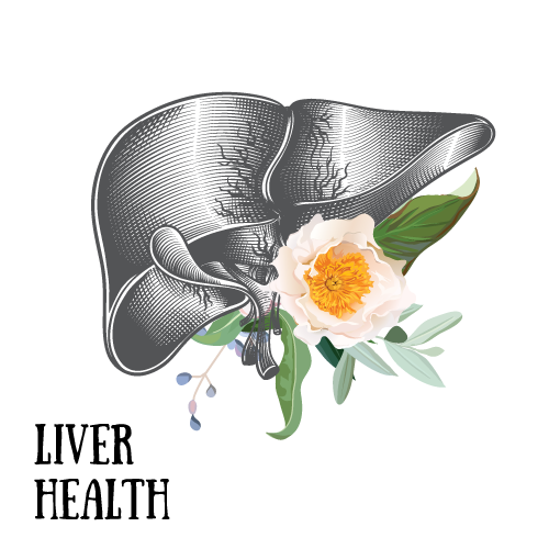 liver-health.png