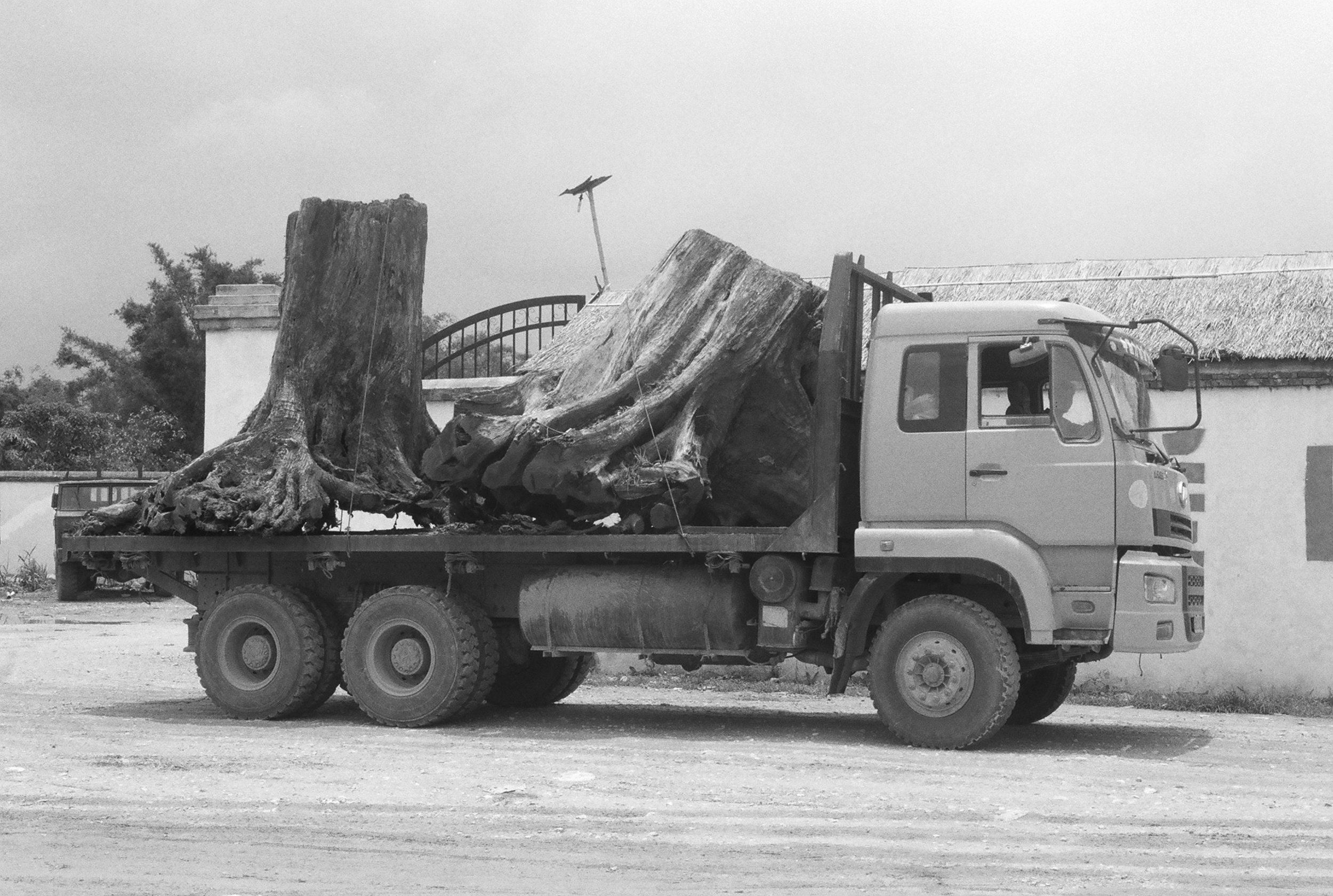 Chinese logging truck with Burmese trees on the China-Myamar border near Nongdao, Yunnan, China.