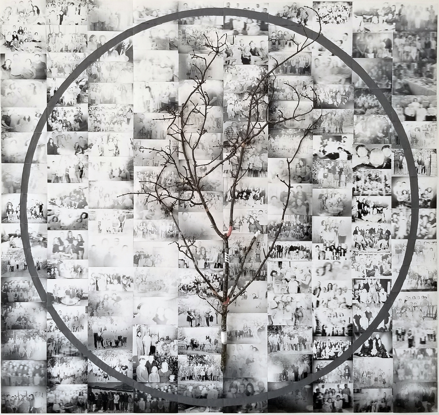 """Have You Forgotten?   2017 laser prints, acrylic, tree branch, medical bandages 93"""" x 96"""" x 14"""""""