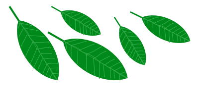 leaves2.png