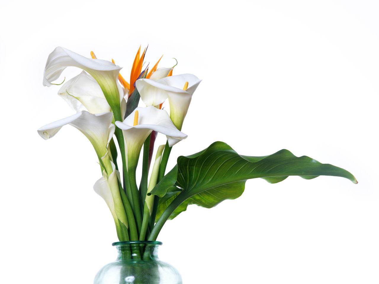 1280-153449200-white-calla-lilies.jpg
