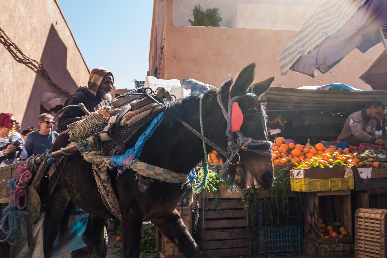 17. Donkeys at the fruit market