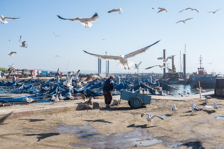 Essaouira fishing port.