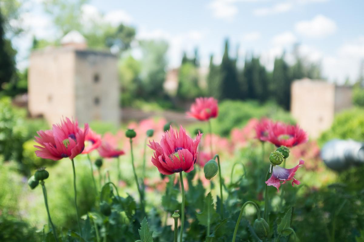 Flowers in Generalife