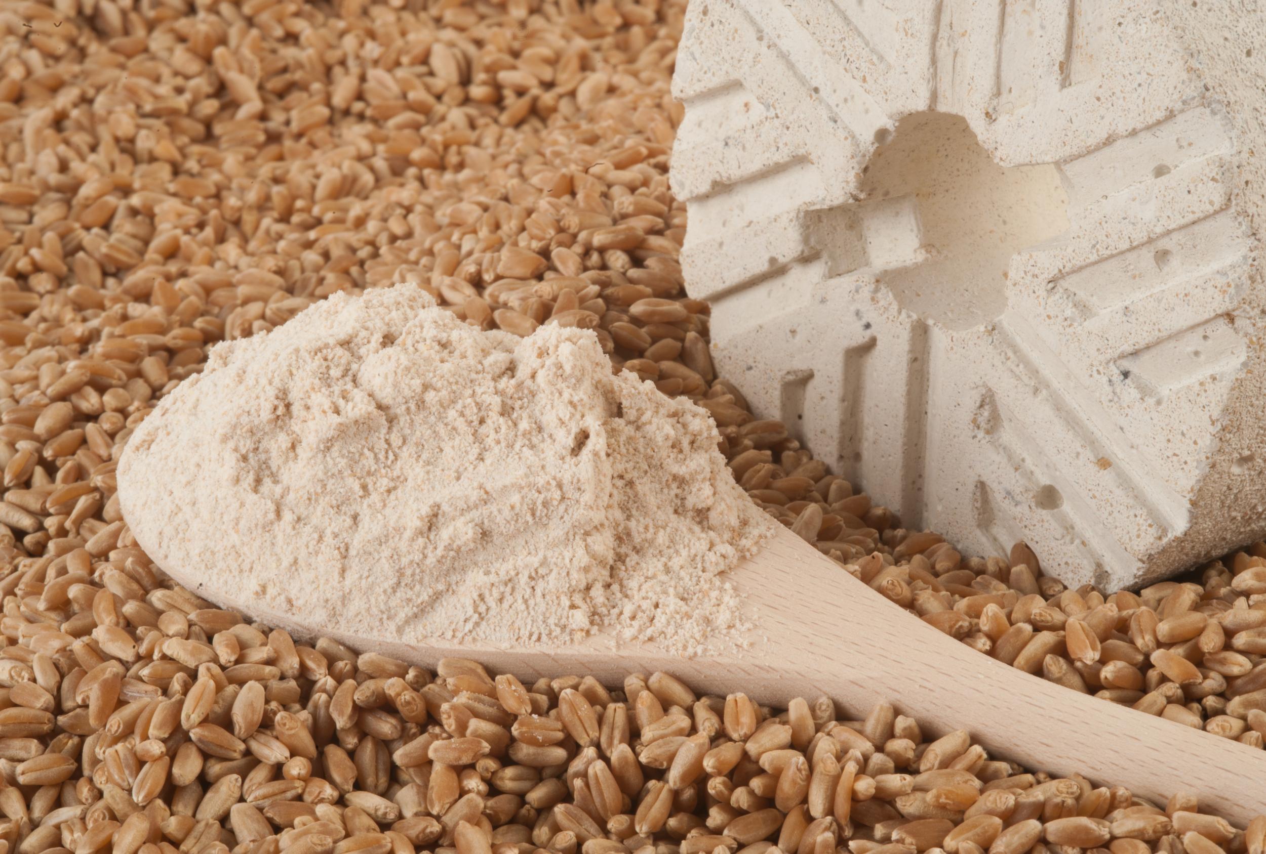 Harina Blanca de Trigo  White Wheat Flour