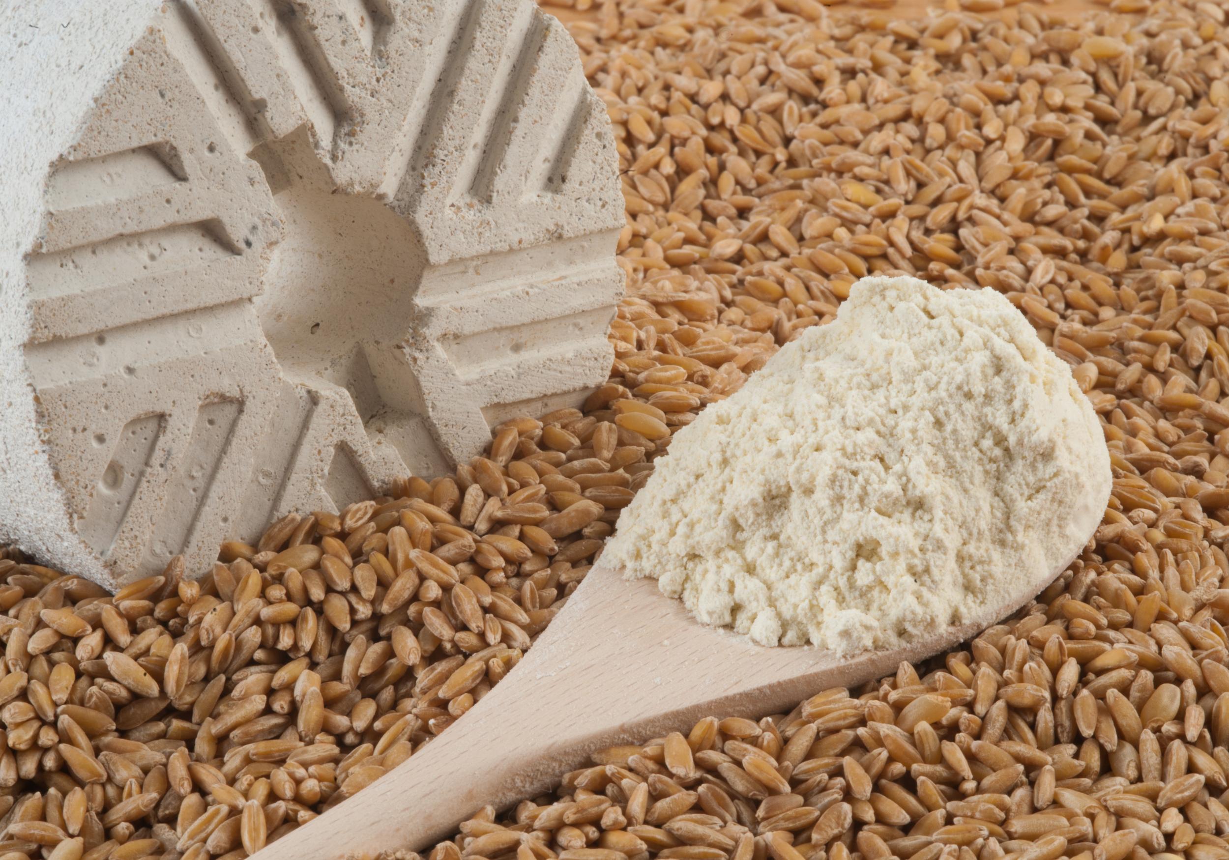 Harina de Tritordeum  Tritordeum Flour
