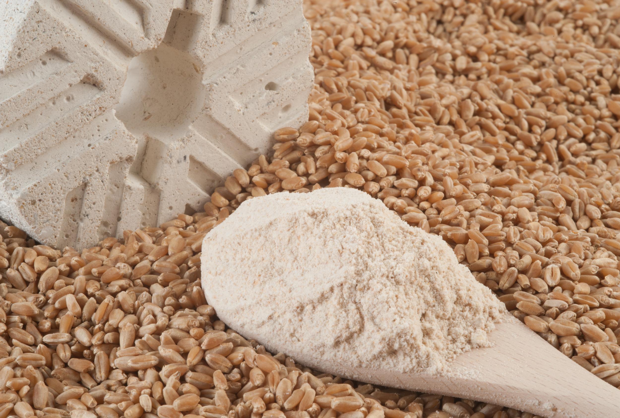 Harina de Trigo Integral  Wholegrain Wheat Flour