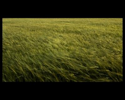 3º CLASIFICADO:  Campos de seda (Javier Prieto Gallego)