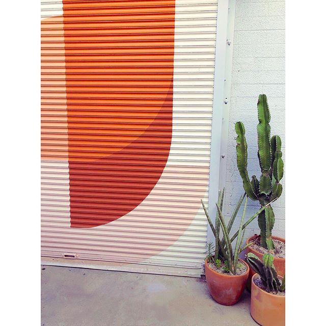 Pretty walls and cacti: issa vibe 🧡🌵✨