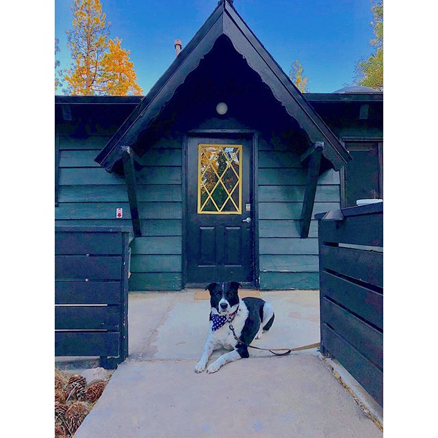 Airbnb guard dog: reporting for duty! ֗ ֗ ֗ #dogsofinstagram #dogsbeingbasic #dogsmile #dogmomlife #dogsworld #instadogs #instadogofficial #adoptdontshop #bigbearlake #airbnb #glamping #instatravel #givemeabuzz #getyourweekendsback #busyasabee #lifehack #helpinghand #righthandgirl #savetimesavemoney #betterthingstodo #beeyourbrand #busyasabee #sandiegoliving #sandiegolife #sdlife #timeismoney #sandiegobusiness #digitalnomads #workfromwherever