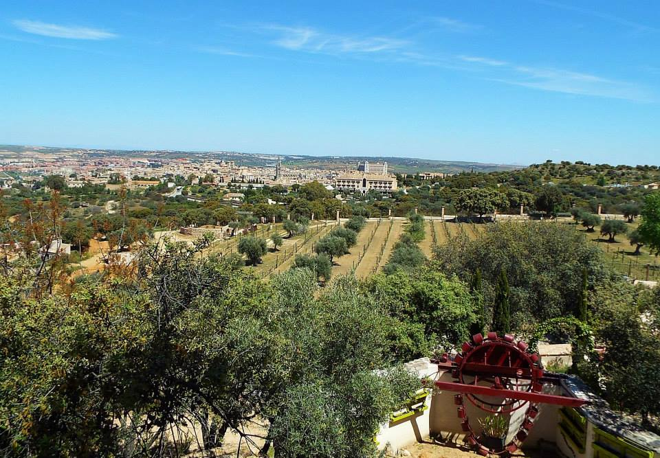 Visiting a vineyard near Toledo, Spain
