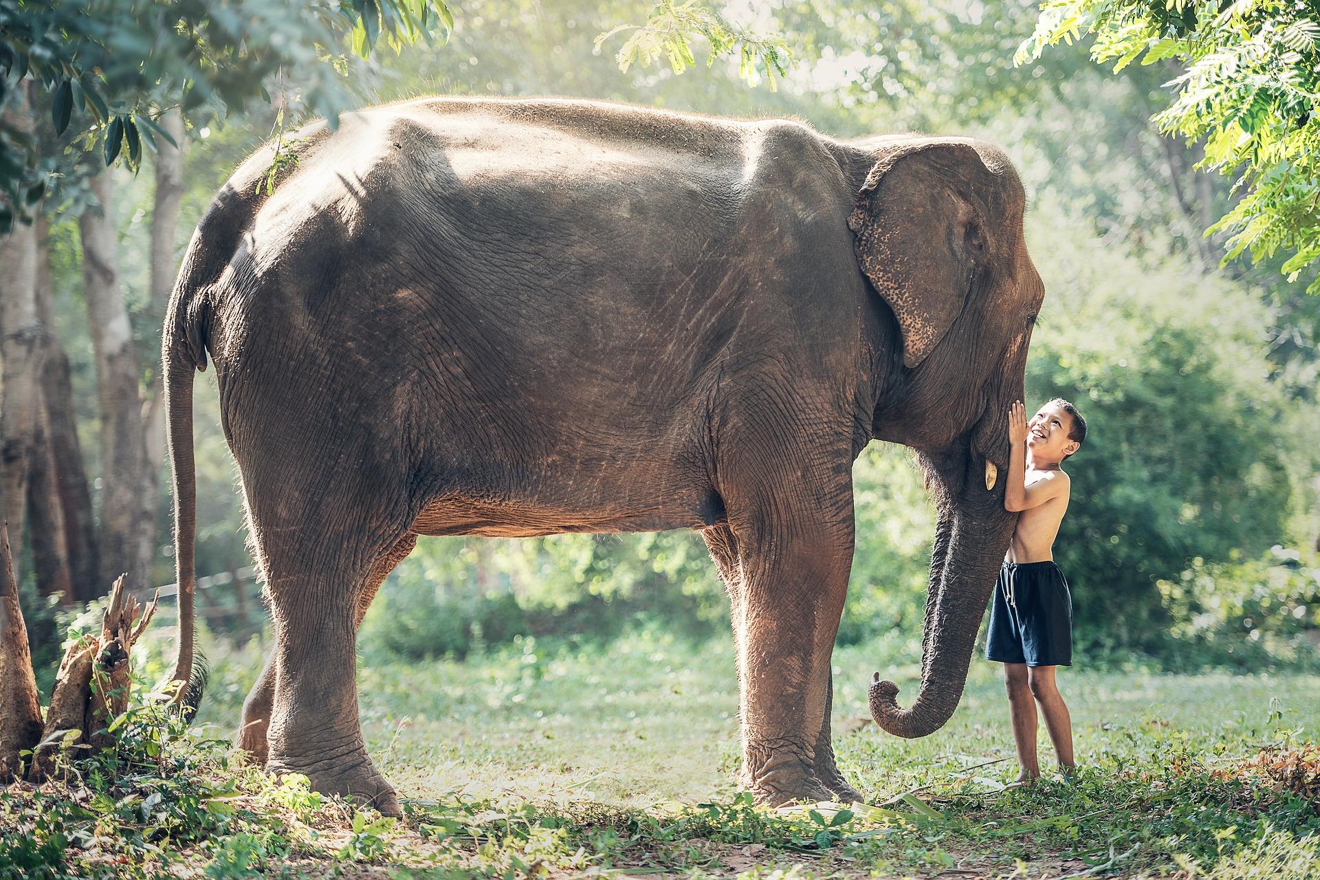elephant-1822492_1920.jpg