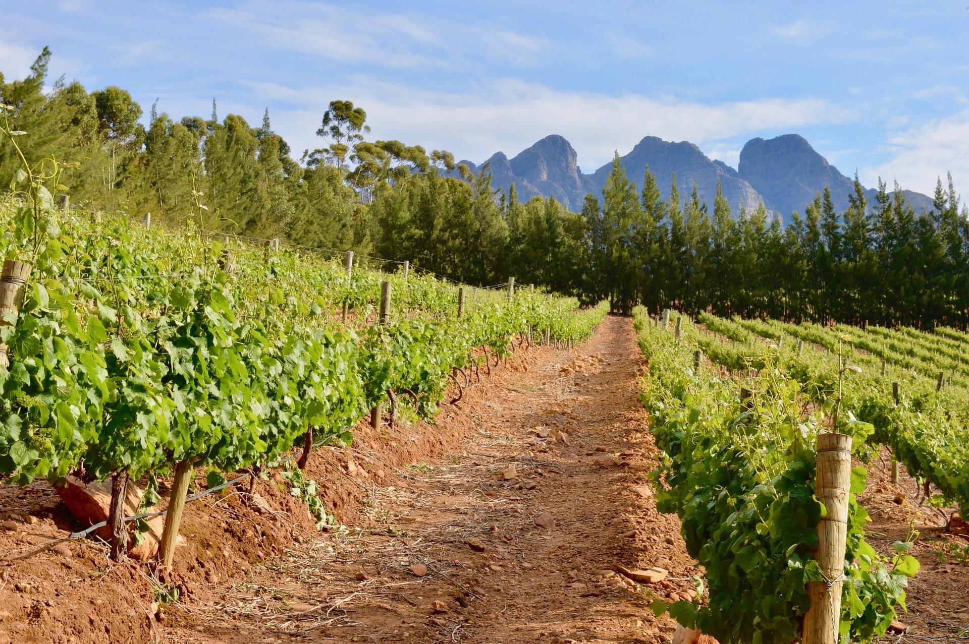 vineyard-716443_1920.jpg