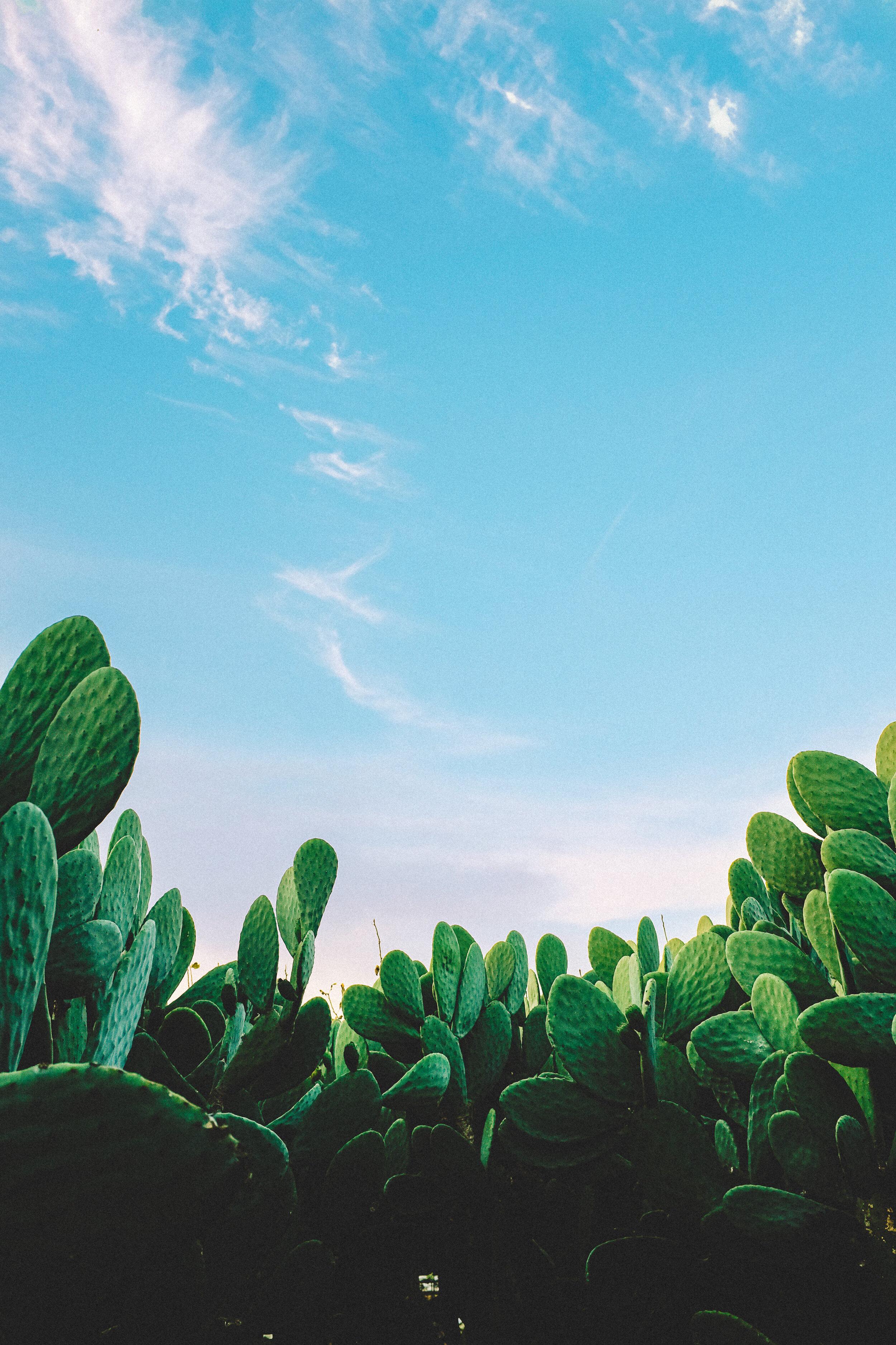 Scottsdale - .