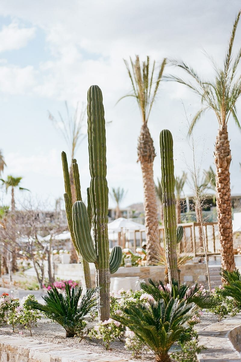 cbr-gallery-landscapingcactus1.jpg