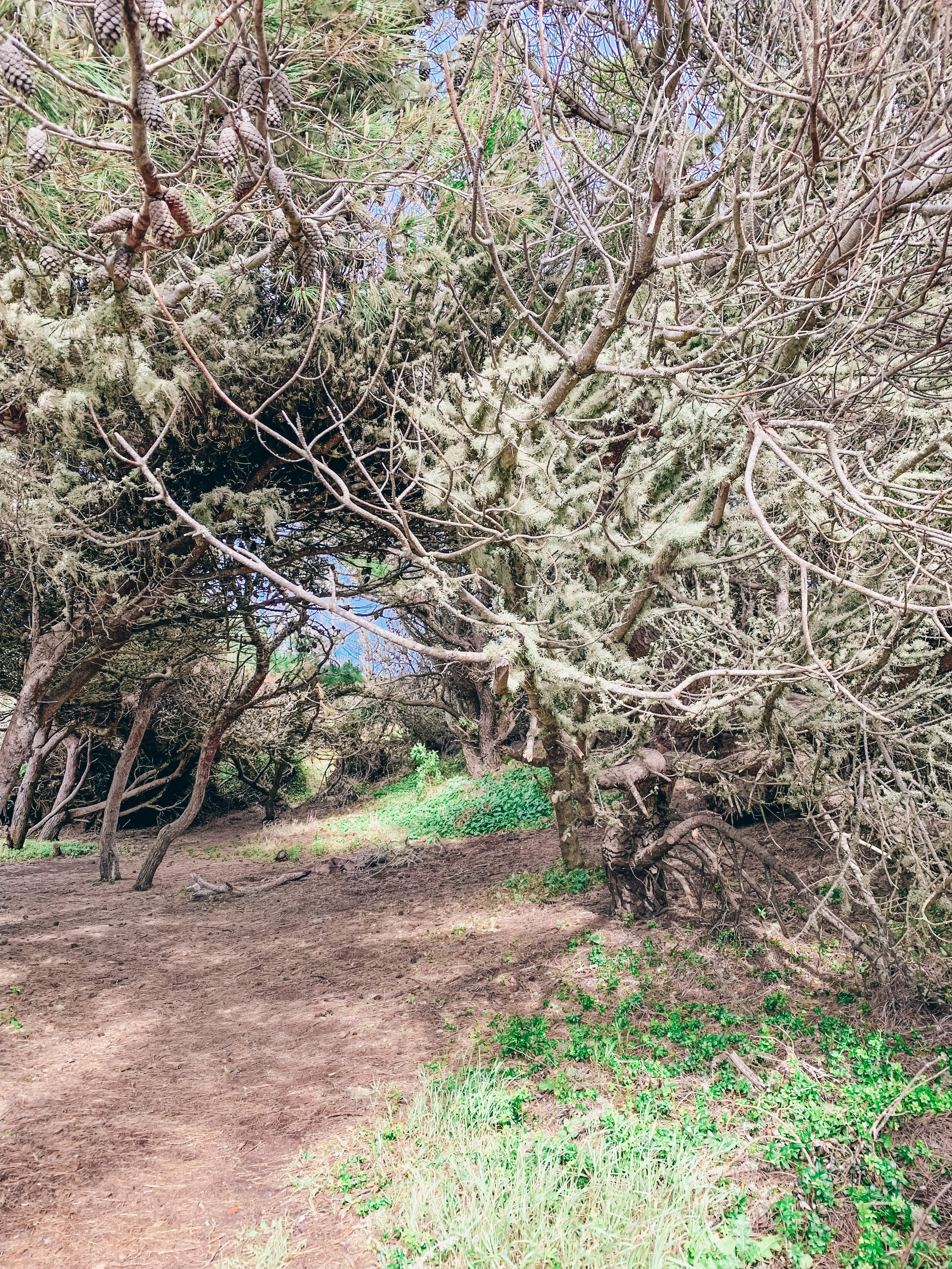 The trail down to Ursa Beach, a hidden gem near Cabo da Roca